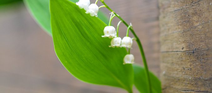 Lilies of the Decking